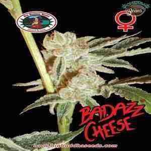 Big_Buddha_Seeds_Badazz_Cheese_Pack_B_2
