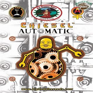 Big_Buddha_Seeds_CHIESEL_Automatic_F_1