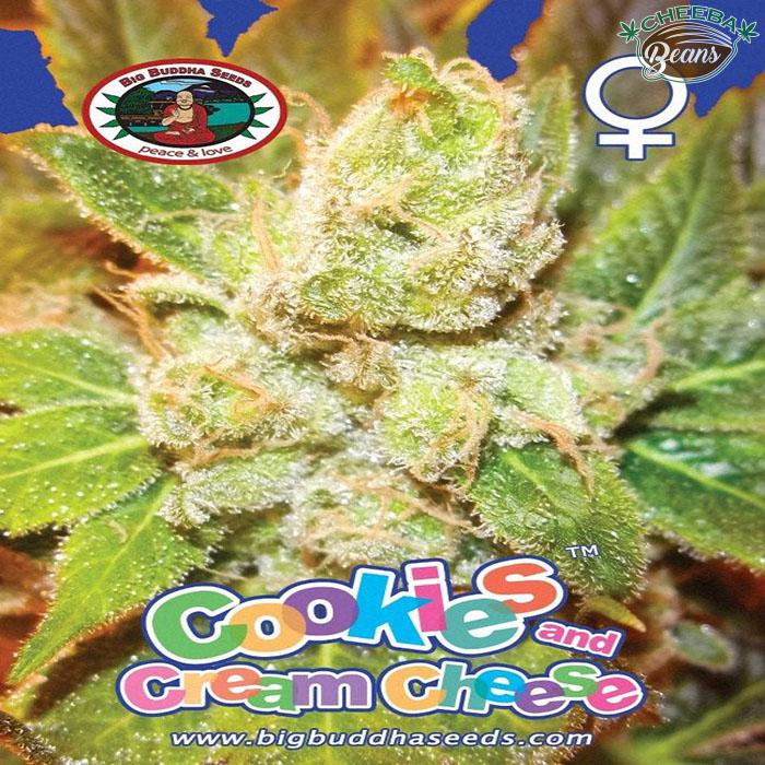 Big_Buddha_Seeds_Cookies_Cream_Cheese_B_2