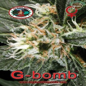 Big_Buddha_Seeds_G_Bomb_B_2