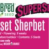 Sunset_Sherbert_Cannabis_Seed_Card