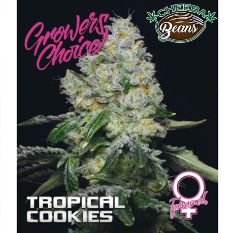 Tropical_Cookies_WM_8640ece4-930d-48d2-9b6b-8003b1c206b1