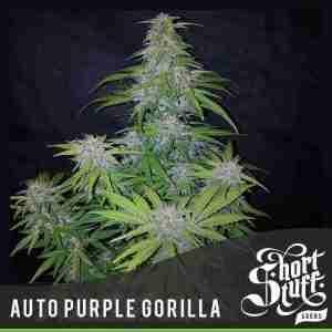 auto-purple-gorilla_2