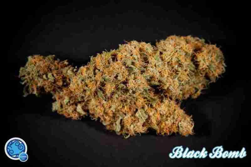 black_bomb_2_c8d91690-5c8b-4988-9768-8b707bfe4ffd