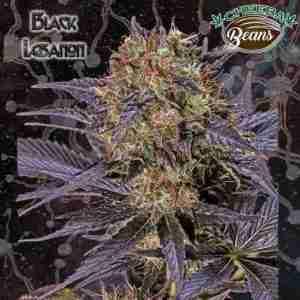 blacklebanon
