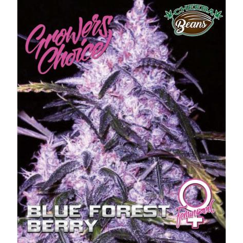 blue-forest-berry-feminized-5-pack_091d8f8b-ca60-4731-82d1-0afbbd986e66