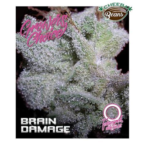 braindamage-feminized-autoflower_dd4510cb-62fd-41c1-b8ce-0a86011921af