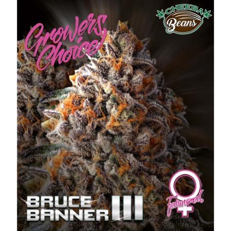 bruce-banner-3-feminized_e33da639-d417-426f-a252-656f2b56a198