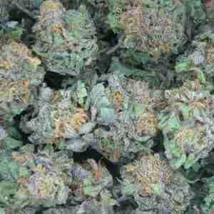 california-kush-buds
