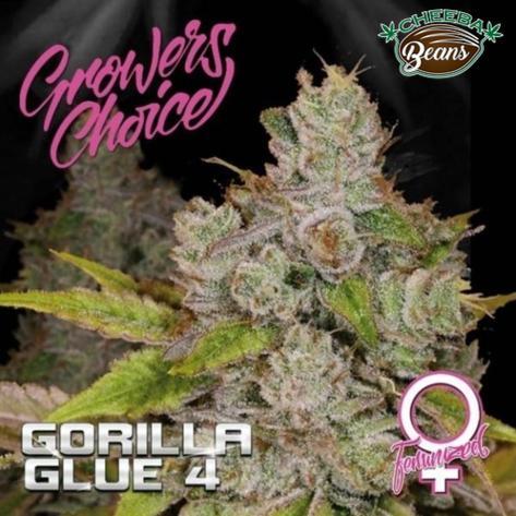 gorilla-glue-4-feminized_d6b437b7-5dce-44f9-9353-2de4b5bf3122