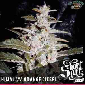 himalaya orange diesel auto