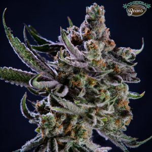 jungle scout cookies
