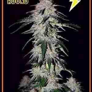 limited-edition-sour-hound_303cfd77-67f7-45b6-865b-ad27c2f00fbc