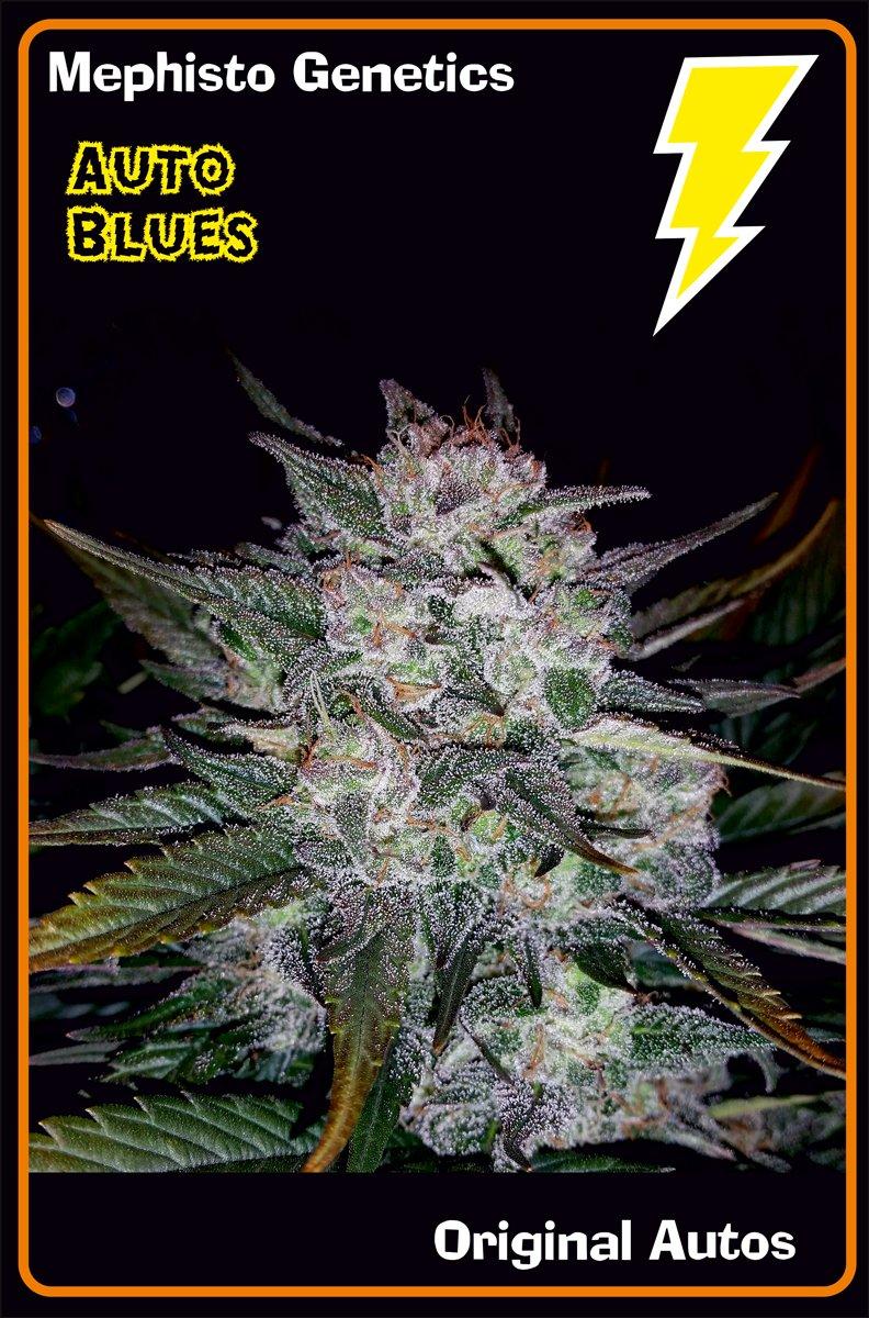 main-strain-auto-blues_99e9d280-6938-4134-8ae8-f27ba45f096a