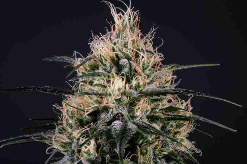 mmg_greendoctor3_95f1f67b-569a-4c29-9d00-72db02bdc91b