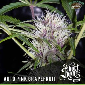 pink grapfruit auto