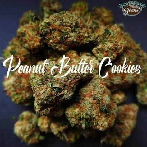 peanut butter cookies cannabis seeds by cheeba beans