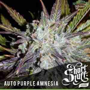 purple amnesia auto short stuff