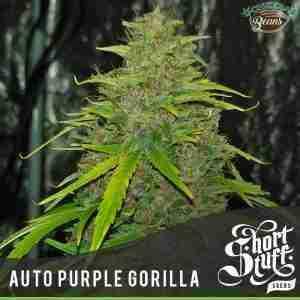 purple gorilla auto