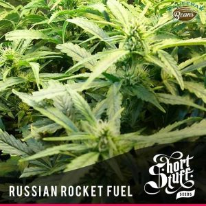 russian rocket fuel auto