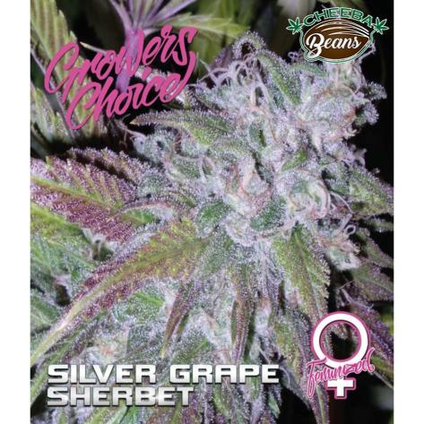 silver-grape-sherbet-feminized_529eab79-cf19-4a2a-b30c-649249aa4b0d