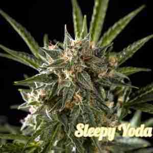 sleepy-yoda-auto-2_611aafc7-cb81-417a-b3d0-9e712c5adc18