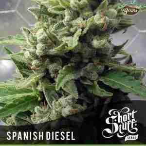spanish diesel auto