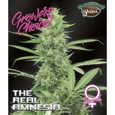 the-real-amnesia-feminized-5-pack