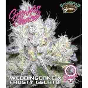 weddingcake-x-gelato-feminized_646ac408-9743-4b3e-8a52-99b2348f0493