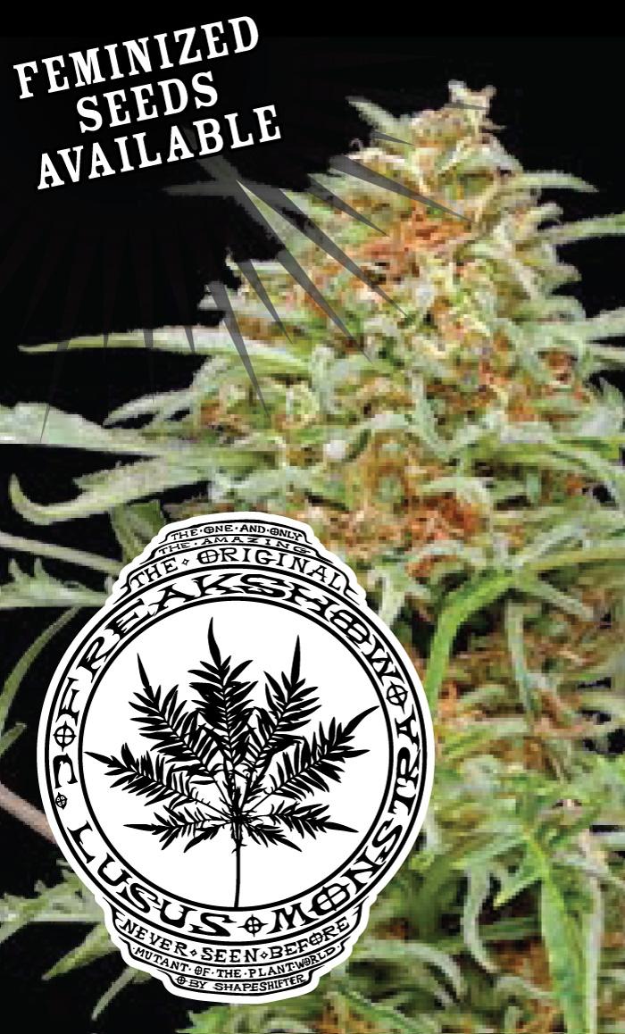 freakshow-cannabis-seeds-humboldt-seed-company