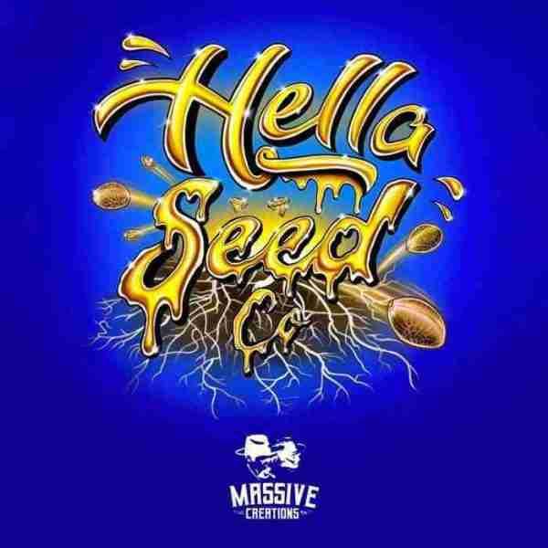 hella-seed-co-x-massive-creaions_1