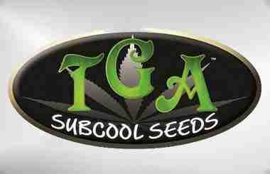 tga-subcool-seeds-1622671178