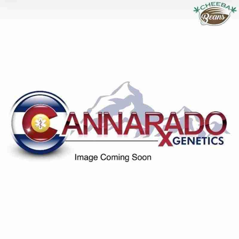 cannarado-genetics-placeholder_7