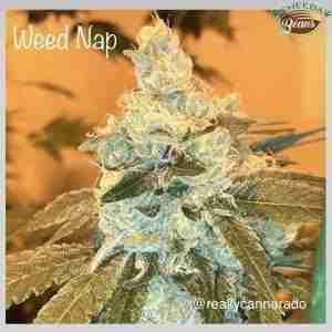 weed_nap_-_cannarado_genetics