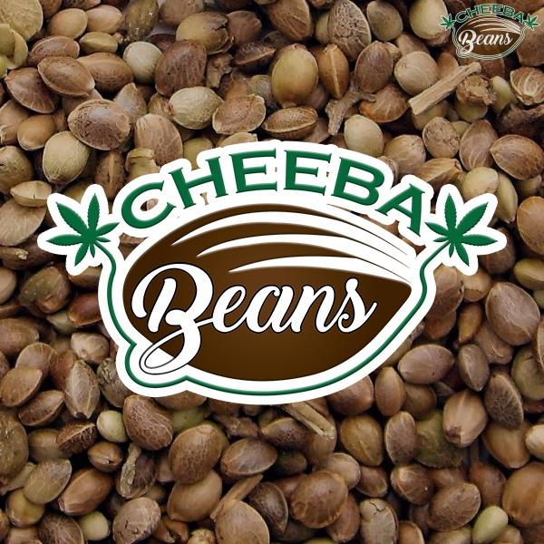 cheeba beans bulk image
