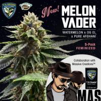 Melon Vader ♀