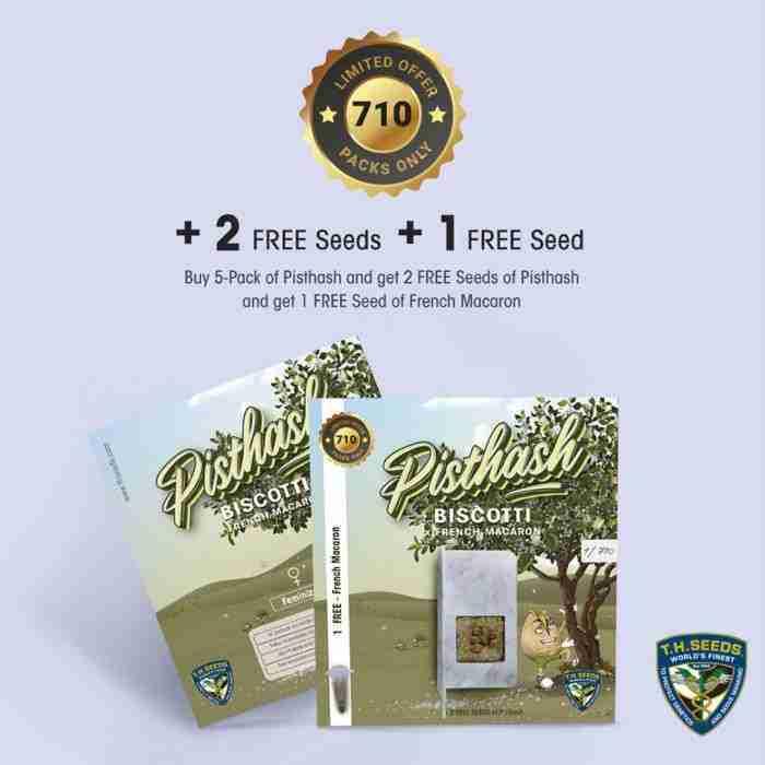 pisthash-cannabis-seeds-3