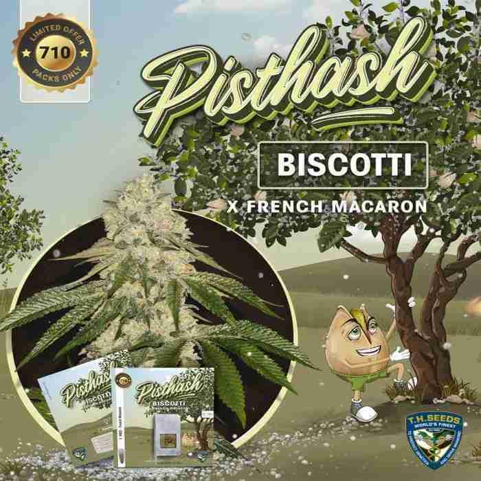 pisthash-cannabis-seeds
