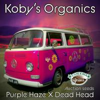Purple Haze x Dead Head ⚤