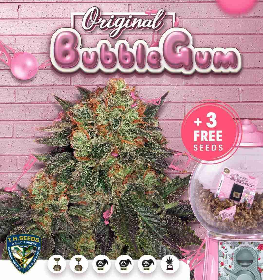 bubblegum-710-special-advert4