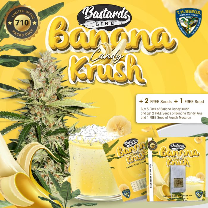 t.h.seeds_banana-candy-krush-promo-preview2_1